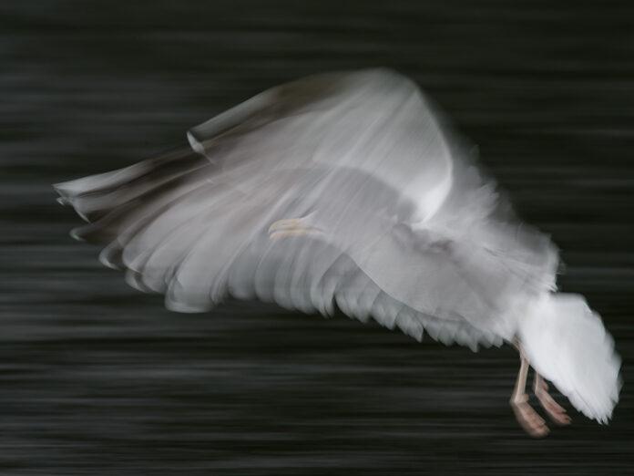 Fågel med lång slutartid