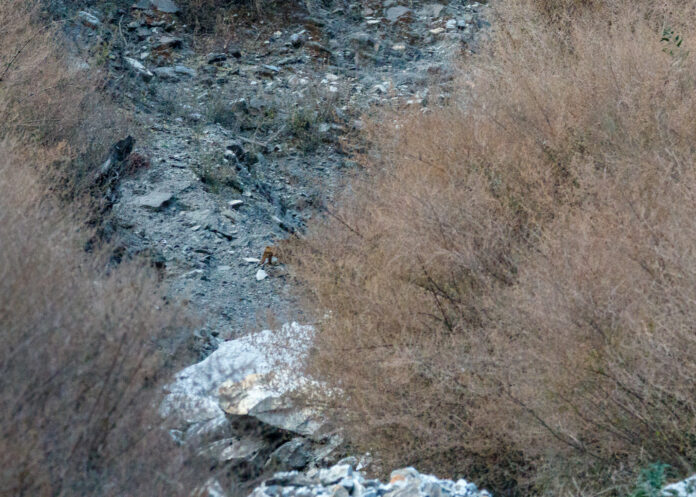 Trödleopard | Jens Hauser