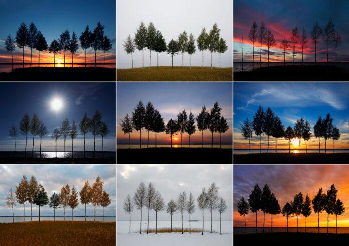 10 träd vid Storsjöns strand