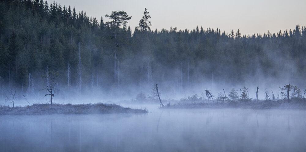 Bäver i Värmland